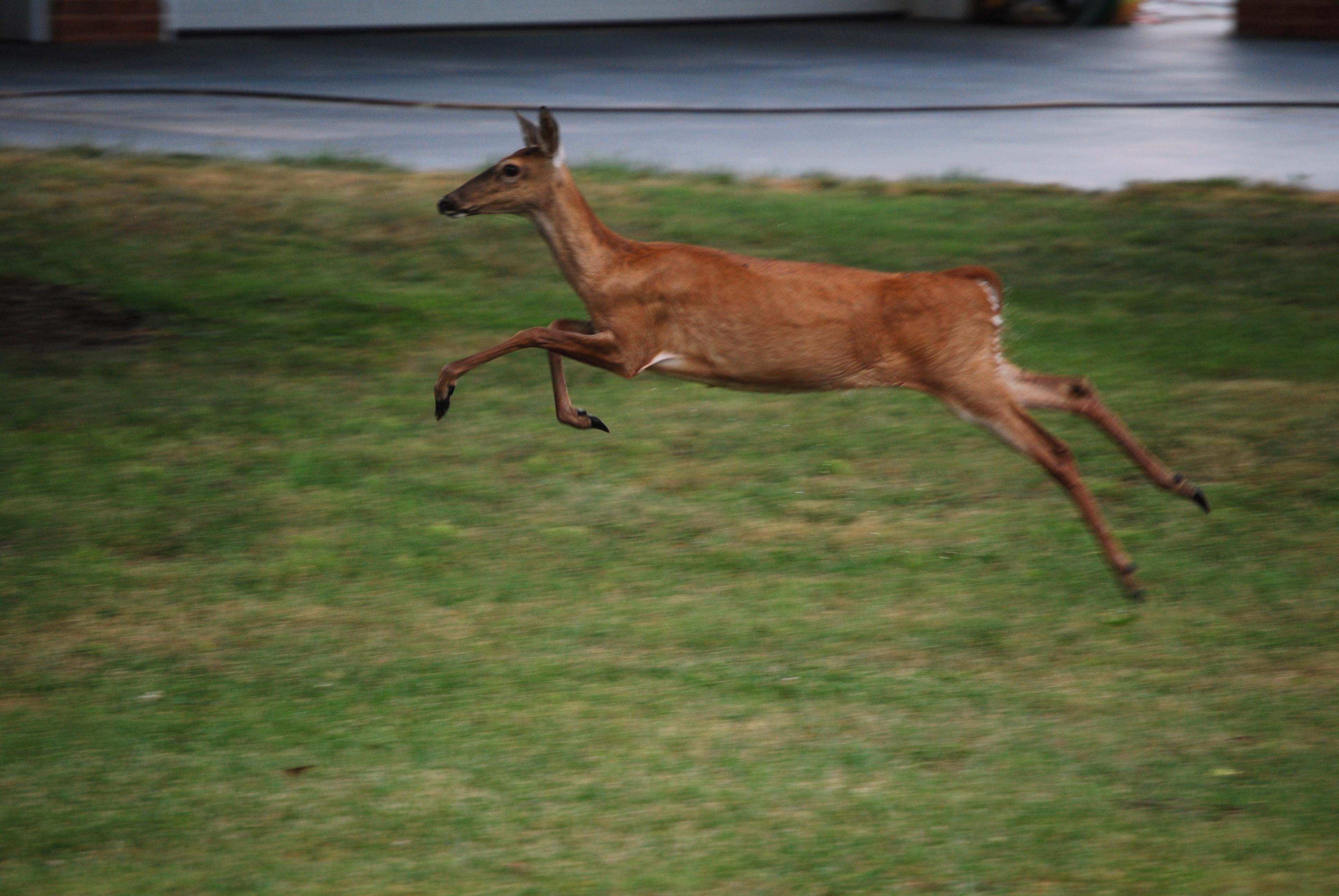 10 deer run