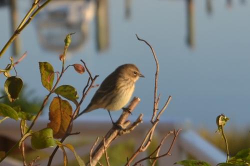 bird11-2-20117-13-03AM