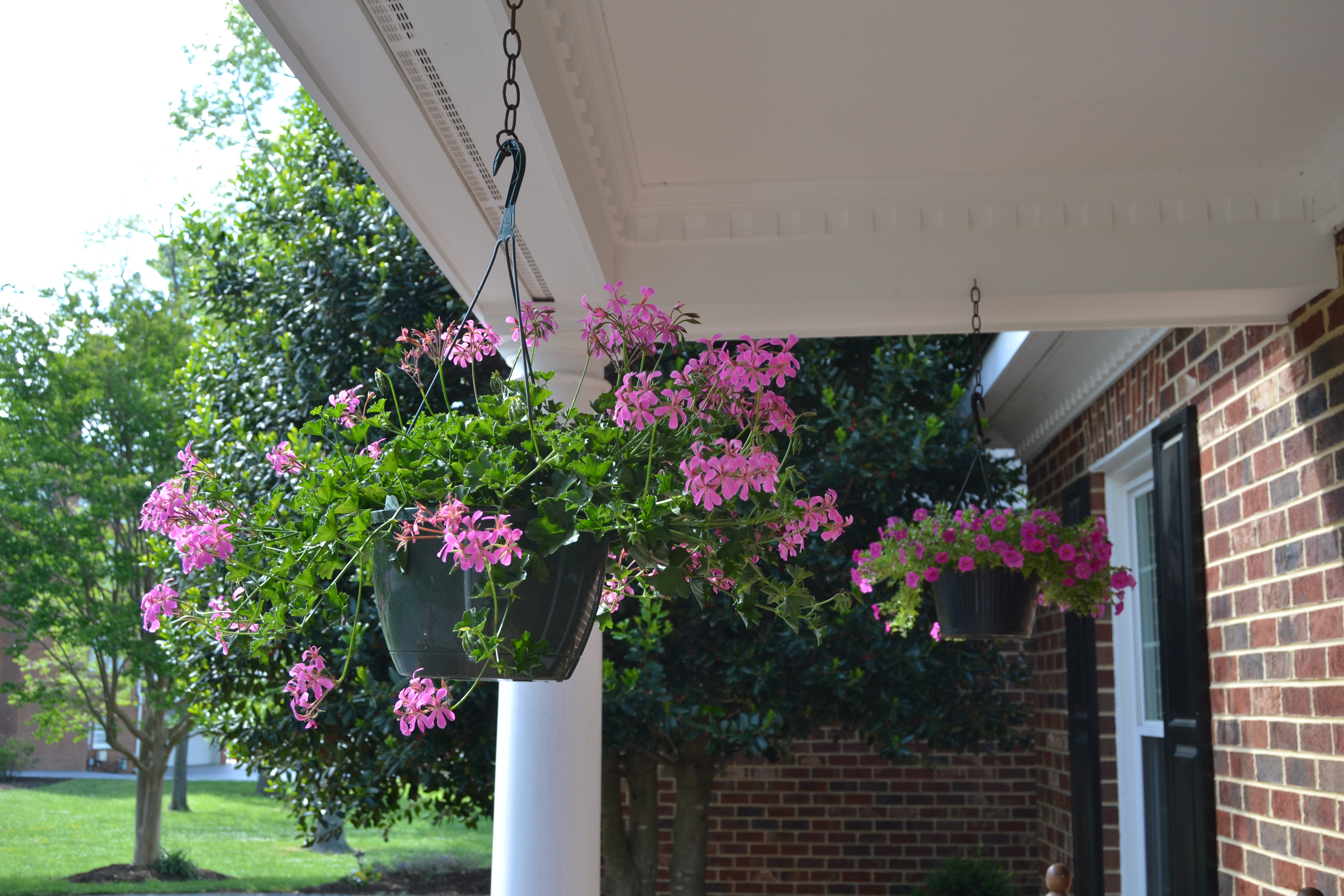 Spring is in bloom these days of mine for Front porch hanging plants