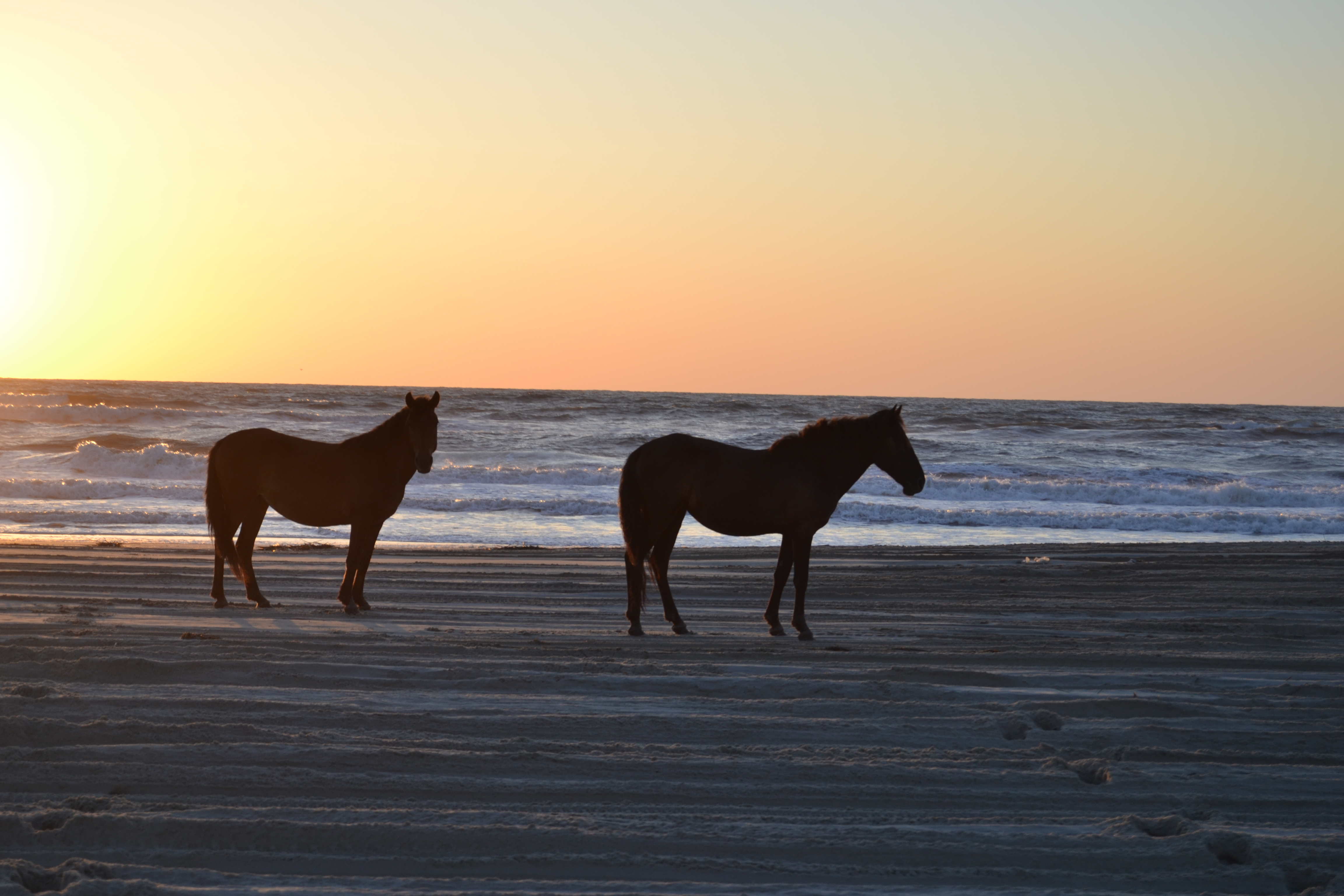 Wild Horses At Sunrise These Days Of Mine