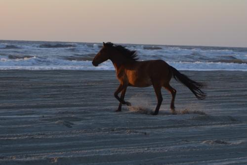 4th horse