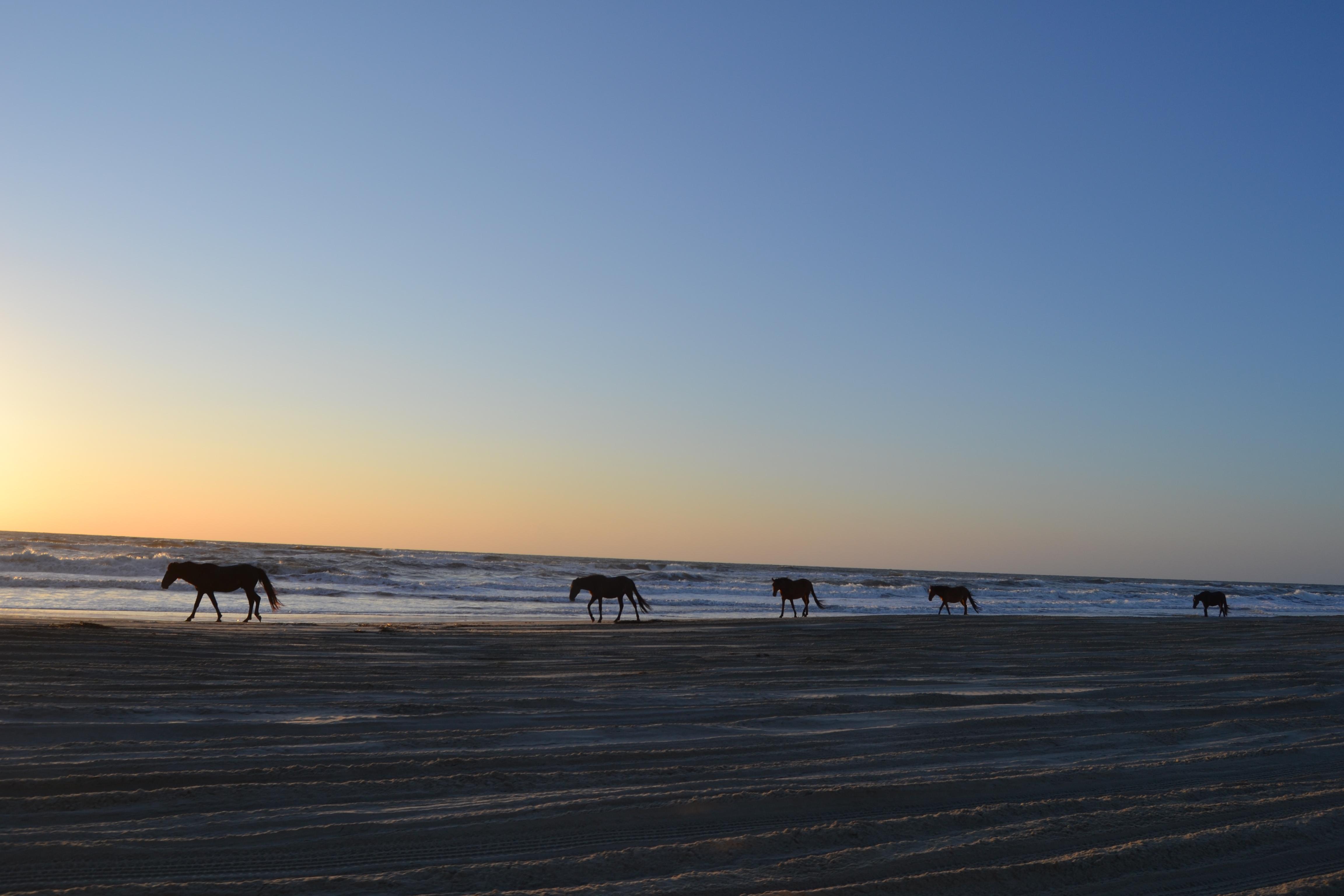 Wild Horses At Sunrise These Days Of Mine
