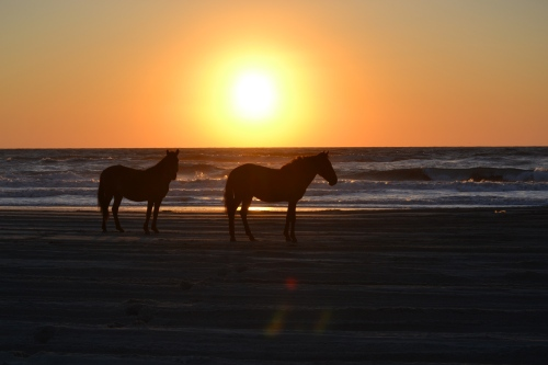 sunrise and horses
