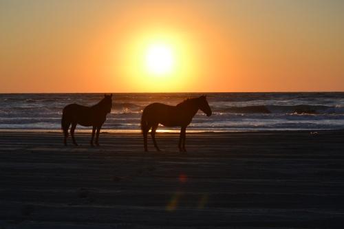 sunrise and horses