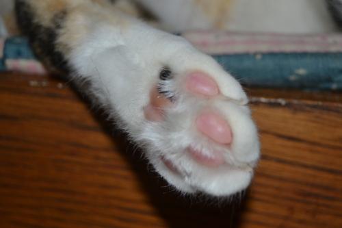 sundae paws