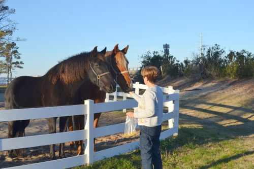 db and horses