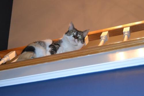 sundae in loft