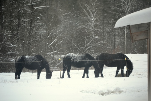 3 horses outside window