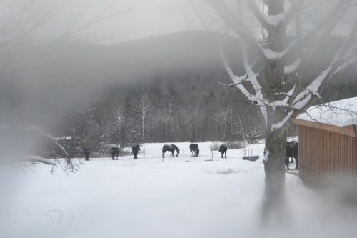 horses thru frosted window pane