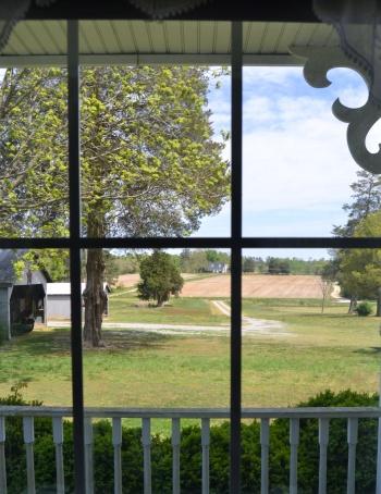 from shirleys window