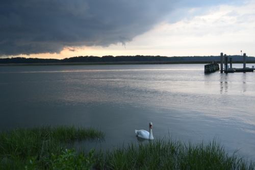 bride swan and storm clouds