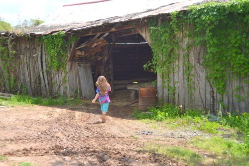 charlie and barn