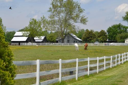 horses and barns