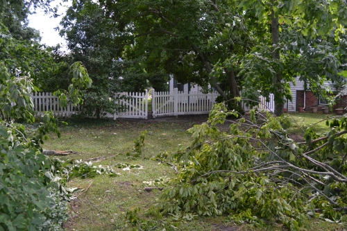 downed limbs and fence