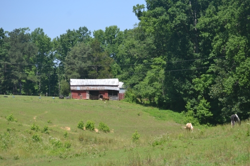 horse barn and hills