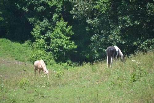 horses1 6-15-2013 11-19-25 AM