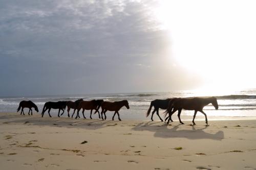 stallion and harem 6-23-2013 6-55-38 AM