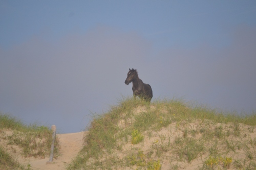 stallion on dune 6-23-2013 7-00-50 AM