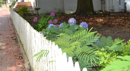 fence and hydrangeas 7-13-2013 11-46-08 AM