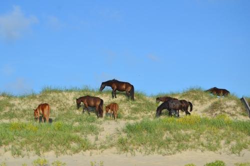 horses on dune 7-21-2013 7-25-41 AM