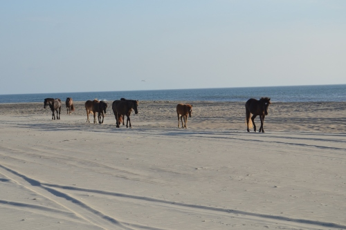 horses on the beach 7-21-2013 7-18-23 AM