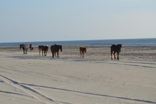 horses on the beach 7-21-2013 7-18-23 AM