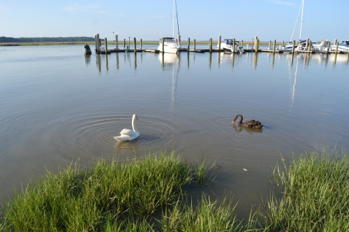swans and marina 5-22-2013 6-22-44 PM