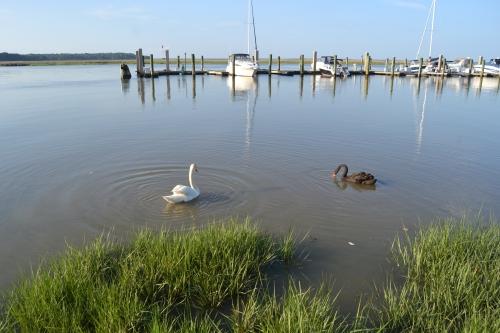 swans and marina 5-22-2013 6-22-44 PM