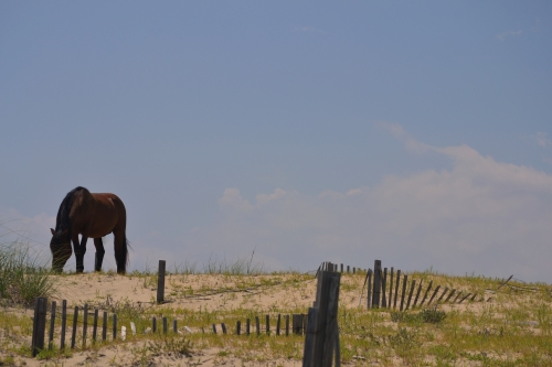 horse and fence1