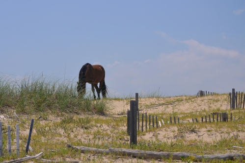 horse and fence2