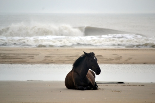 horse and surf 8-18-2013 7-48-42 AM