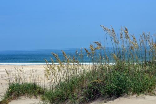 seagrass 8-11-2013 12-22-00 PM 8-11-2013 12-22-00 PM