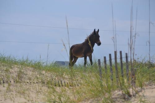 stallion1 8-11-2013 12-17-05 PM