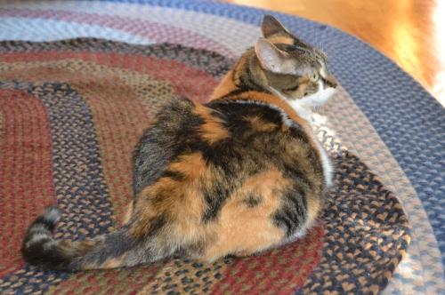 sundae rug last