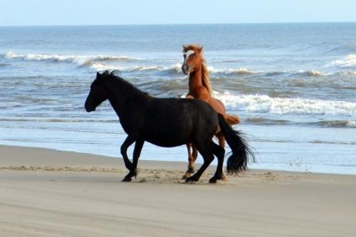 2 stallions best 9-1-2013 8-30-28 AM