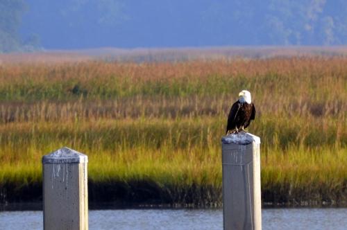eagle1 9-25-2013 8-06-45 AM