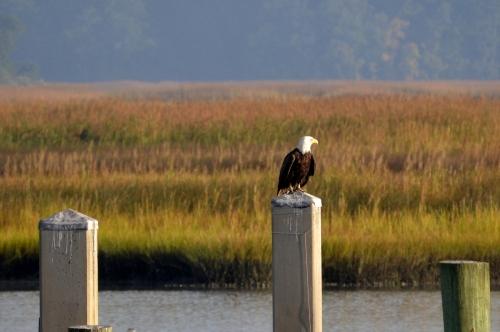 eagle2 9-25-2013 8-06-57 AM