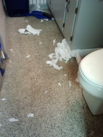 bathroom tissue 10-15-2013 12-09-03 PM