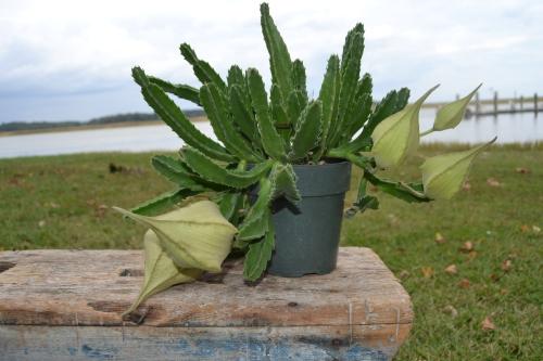 cactus1 10-7-2013 2-26-57 PM