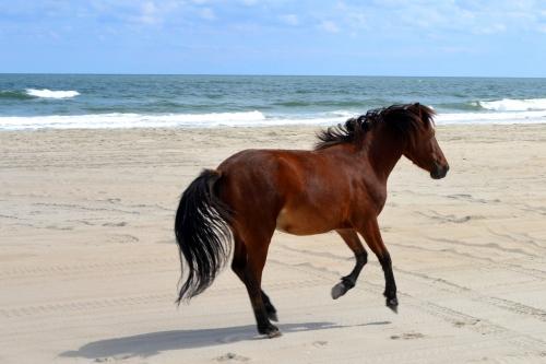 horse 2 9-26-2013 1-12-23 PM
