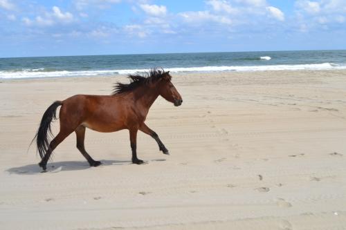 horse1 9-26-2013 1-12-22 PM