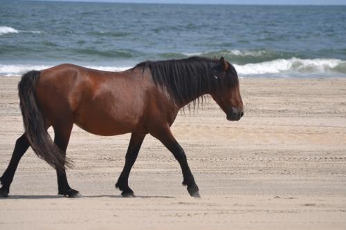 horse3 9-26-2013 1-17-29 PM