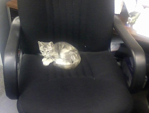 kitty keen in my chair 8-23-2013 9-38-02 AM