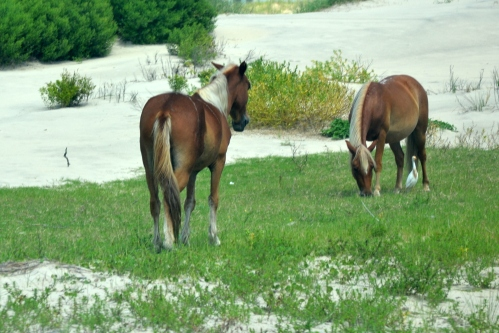 horses in grass 8-11-2013 12-01-56 PM