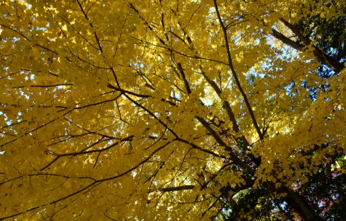 sunroof yellow 11-18-2013 12-19-10 AM