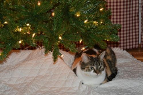 sundae tree1 12-1-2013 8-58-26 AM