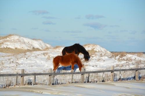 2 horses 1-22-2014 3-48-35 AM