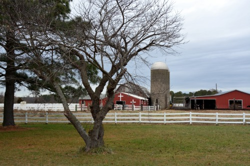 barns and trees 1-5-2014 2-22-13 AM