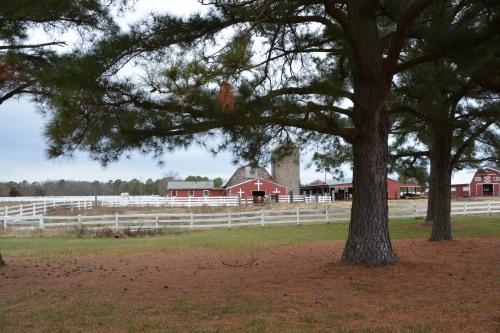 barns trees 1-5-2014 2-22-30 AM