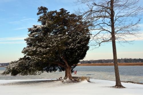 cedar tree 1-29-2014 9-43-56 AM